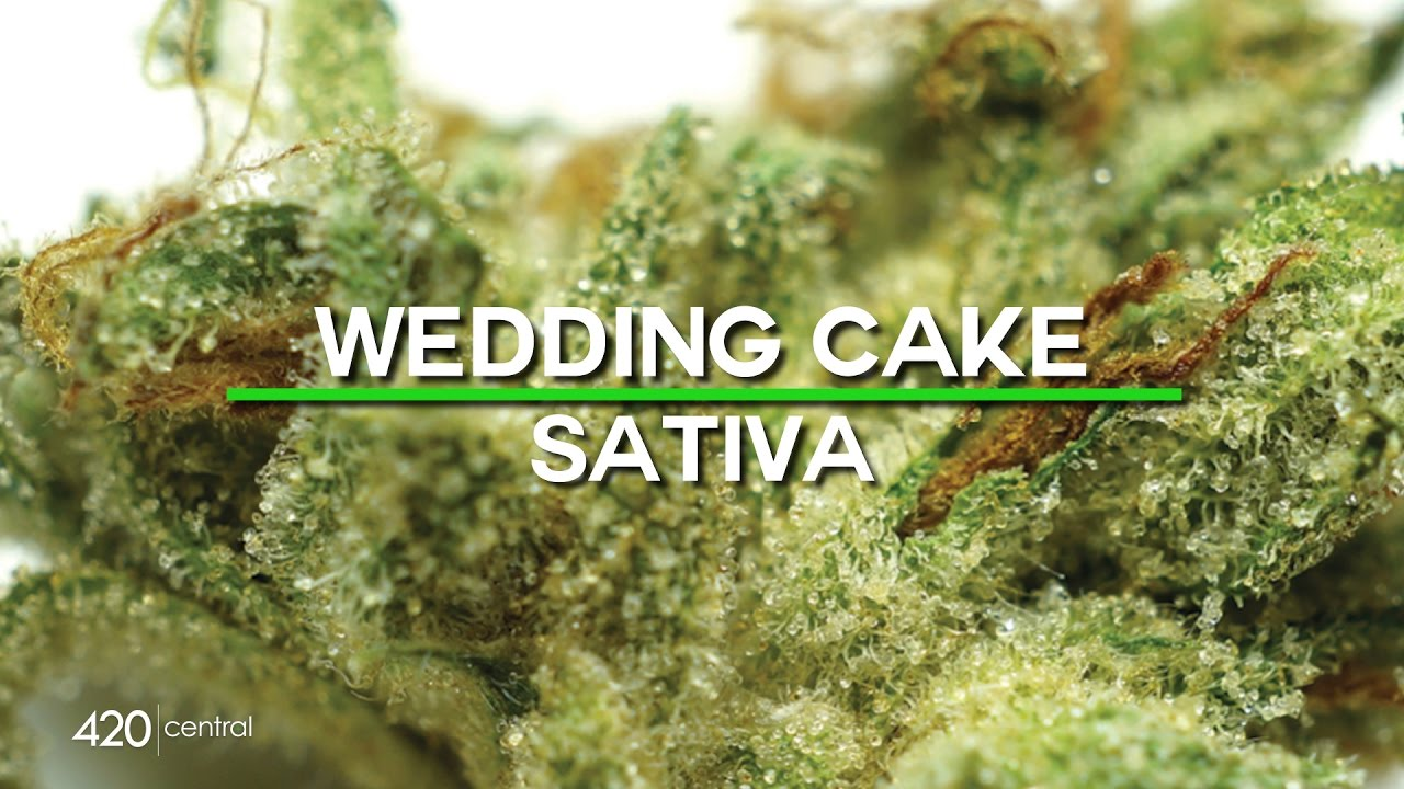 wedding cake weed indica or sativa wedding cake cannabis strain cannamaps 26796